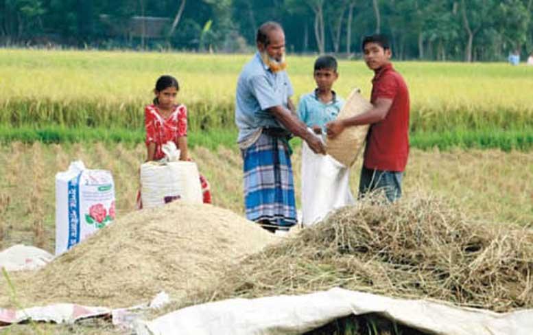 লক্ষ্যমাত্রা ছাড়িয়ে বোরোর বাম্পার ফলন কুমিল্লায়