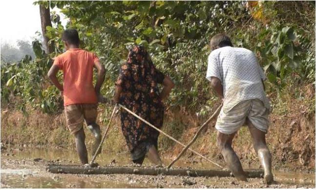 স্ত্রী-ছেলেকে দিয়ে মই টানাচ্ছেন কৃষক